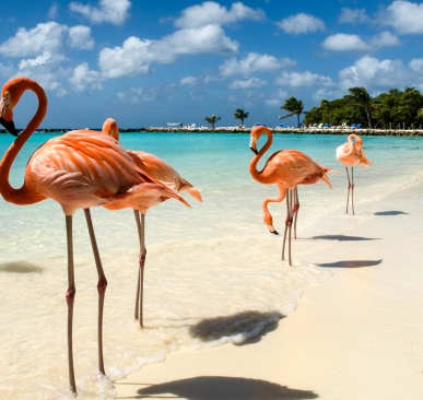 flamingos-on-the-beach-istock_8252068_large-2-2_1581675580-72236daa554cac1112f9a9642ababbd0.jpg
